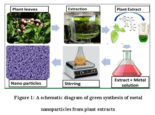 A Review on Green Synthesis of Cu and Cuo Nanomaterials for Multifunctional Applications